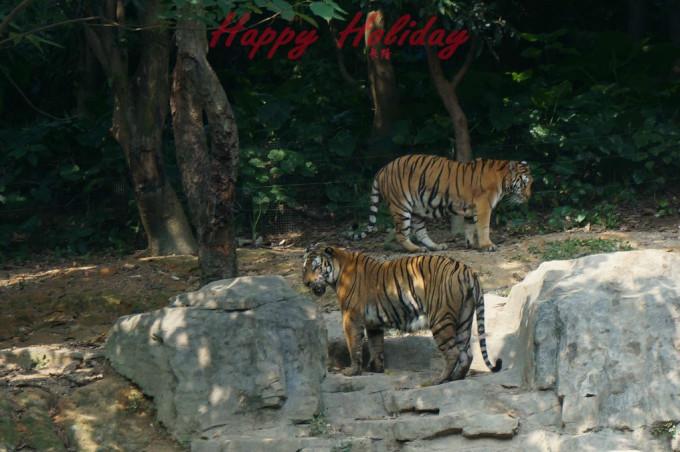 中秋假日的开心之旅——广州长隆野生动物园,大马戏