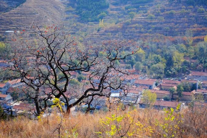 11月13日青州柿子沟风景区-青州古城休闲一日游活动