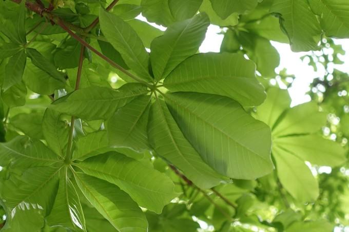 背景 壁纸 绿色 绿叶 树叶 植物 桌面 680_453