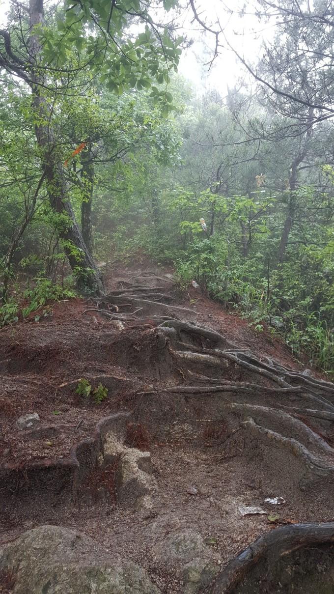 微信头像树林意义